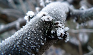 Snow and Ice Branch
